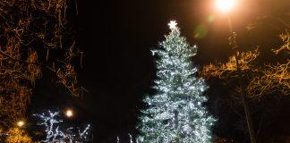 Mesto Malacky má v centre v parku na Kláštornom námestí vyzdobený vianočný strom (borovicu, ktorá tam priamo rastie). Foto: Stanislav Osuský