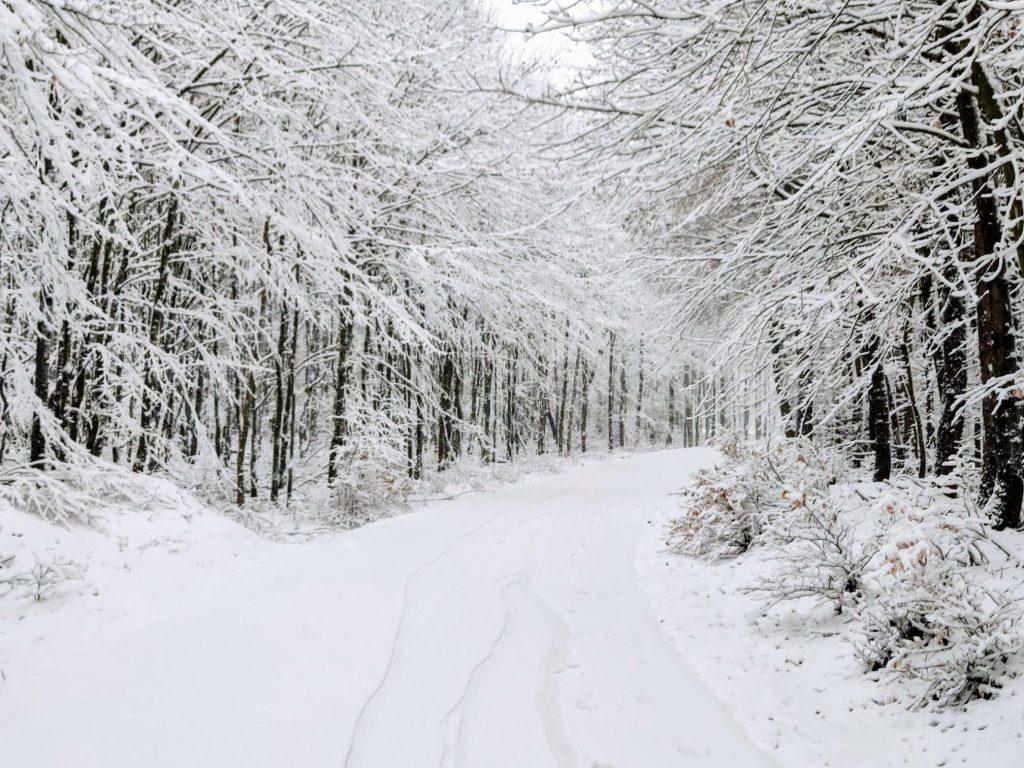 Takto dnes vyzerali lesy nad Račou.