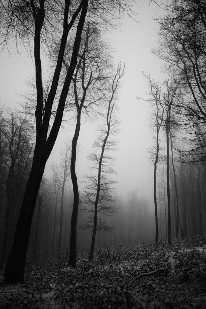 Jemný dotyk hmly, Barbora Žilinková, 3. miesto
