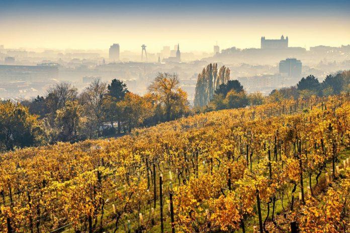 Vinohrady na Strážoch, Matej Kováč, Špeciálna cena starostu mestskej časti Bratislava-Nové Mesto
