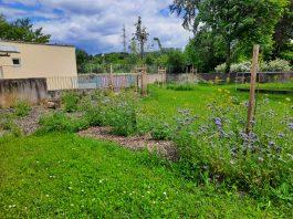 Permakultúrna záhrada v Domove sociálnych služieb prof. Karola Matulaya na Lipského