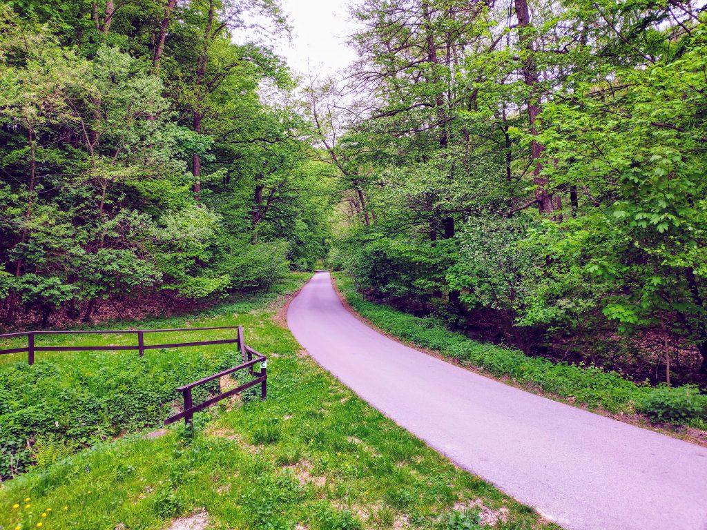 Cesta pri rybníku